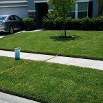 Fertilization, pest control, fungus control, Jacksonville florida