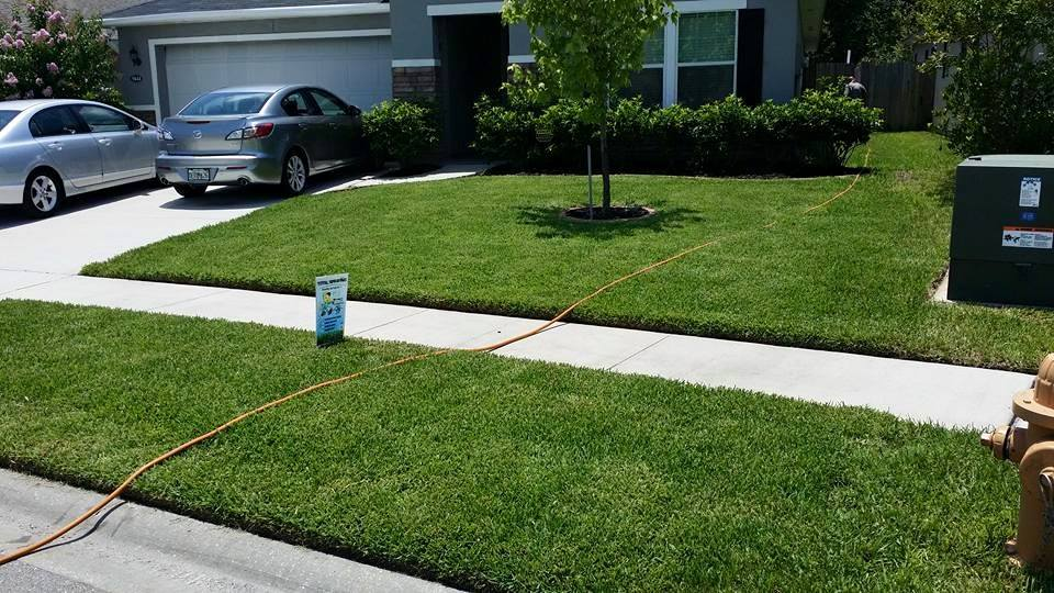 Lawn Pest Control Jacksonville Fl Weed Control Lawn