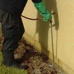 Termite Control – Termite Treatment